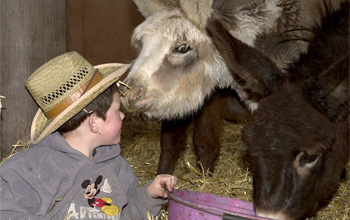 Donkeys for TV Children's Parties Donkeys for hire Donkeys for visits Donkeys to ride Donkeys to drive Donkeys to lead Donkeys to pet Cuddly foals to OAPs! Donkeys for all!
