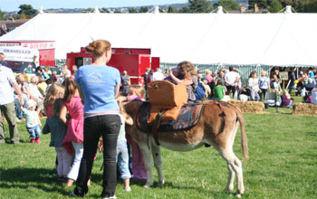 donkey rides and donkey hire Stonehill Donkeys